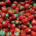 Proef onze aardbeien