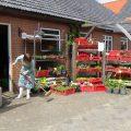 Tuinplanten bij Nieuw Toutenburg