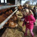 Leuke en leerzame boerderijlessen bij Nieuw Toutenburg voor groep 3 t/m 8