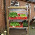 Er zijn weer groenteplantjes